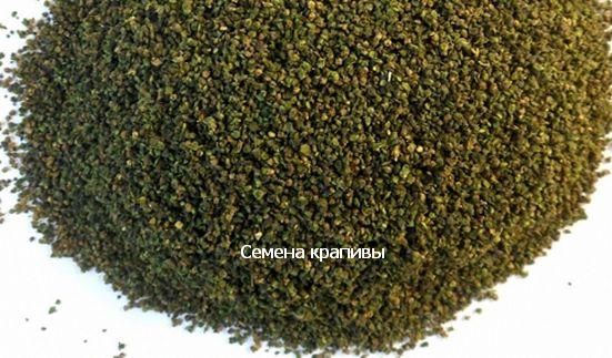фото семян крапивы