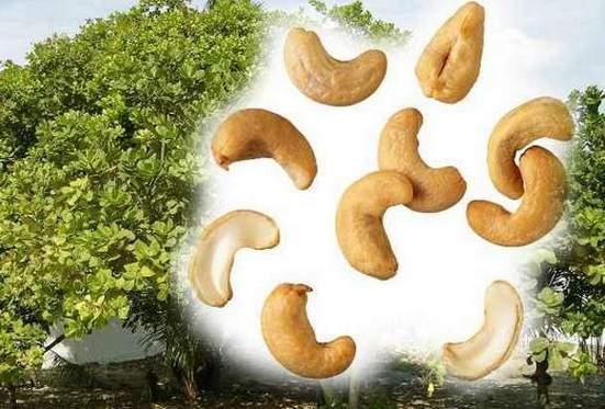 норма в день орехов